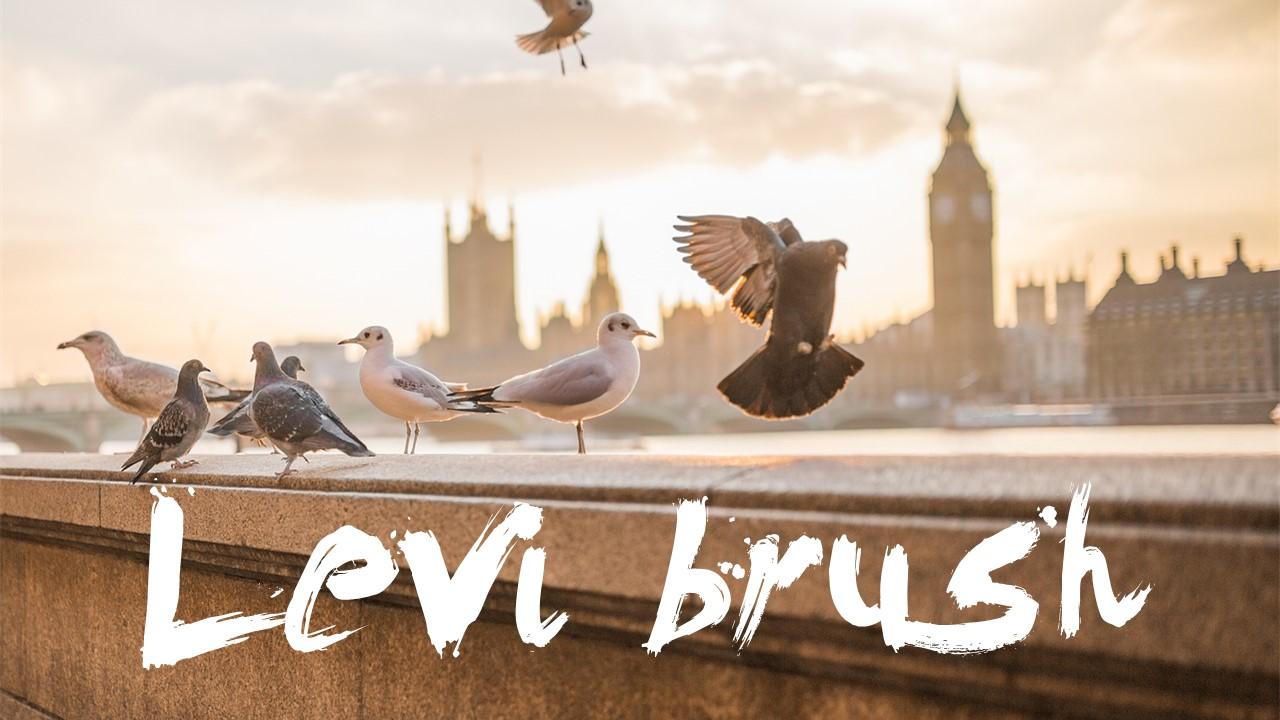 levi-brush
